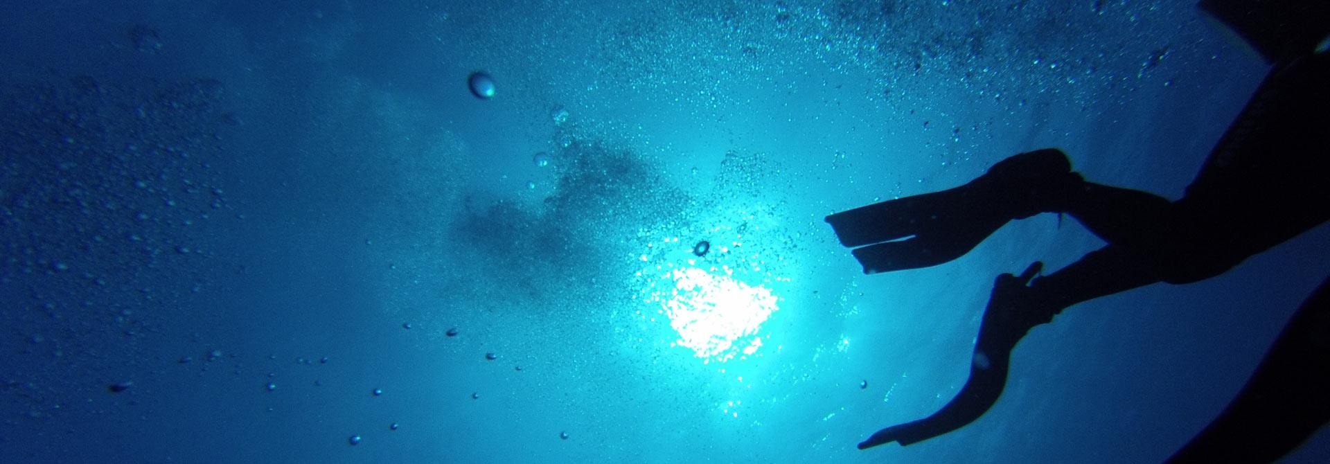 CNPS-web-imatge-submarinisme-inici8