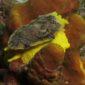 CNPS-submarinisme-fons marí-nudibranquis
