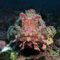 CNPS-submarinisme-fons marí-peixos-escòrpora
