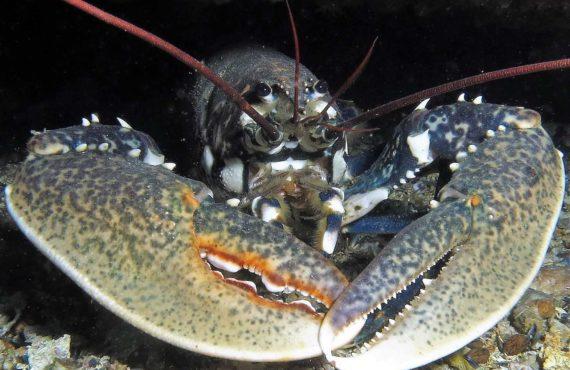 CNPS-submarinisme-fons marí-crustacis-llamantol