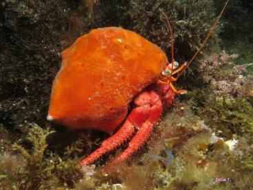 SORTIDES D'IMMERSIÓ | Secc. Submarinisme  fins juny 2018